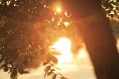 Indicatore luminoso ed ombra Fotografia Stock Libera da Diritti