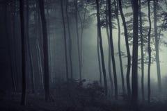 Indicatore luminoso ed ombra nella foresta fotografia stock libera da diritti