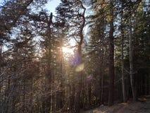 Indicatore luminoso fra gli alberi Immagini Stock Libere da Diritti
