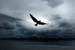 Indicatore luminoso nebbioso in cieli ed in uccello Fotografie Stock Libere da Diritti