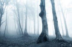 Indicatore luminoso phantomatic sconosciuto in foresta scura con nebbia immagini stock libere da diritti