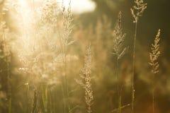 Indicatore luminoso scintillante di mattina Fotografia Stock Libera da Diritti