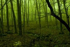Indicatore luminoso verde che emette luce attraverso la nebbia della foresta Fotografia Stock Libera da Diritti