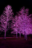 Indicatori luminosi della decorazione sugli alberi alla notte Immagine Stock Libera da Diritti
