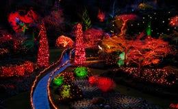 Indicatori luminosi di notte di Cristmas nel giardino fotografia stock libera da diritti