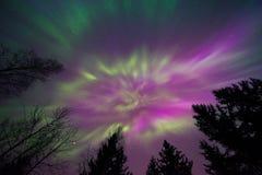 Indicatori luminosi nordici Fotografie Stock