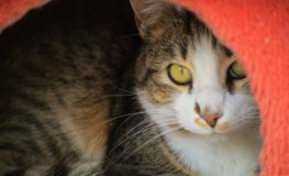 Indicazione del gatto Immagine Stock Libera da Diritti