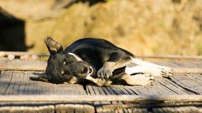 Indicazione di rilassamento del cane nero del villaggio e masticare sull'osso Fotografia Stock