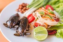 Indicus Lethocerus и зеленый салат папапайи, Стоковые Фото