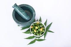Indien Ayurvedic Neem et huile, Indien Ayurvedic images libres de droits