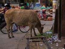 Indien, Delhi stockfoto