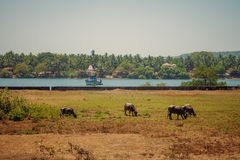 Indien-goa lizenzfreie stockbilder