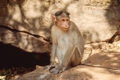 Indien-goa stockfotografie