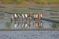 Indien GOA, 03 Februari 2018 Indiska arbetare plogar fältet med skyfflar och reflekteras i vattnet Tungt manuellt arbete in royaltyfri fotografi