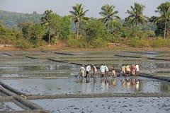 Indien GOA, 03 Februari 2018 Indiska arbetare plogar fältet med skyfflar och reflekteras i vattnet Tungt manuellt arbete in royaltyfria foton