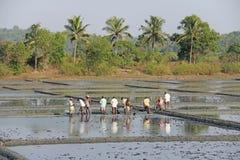 Indien GOA, 03 Februari 2018 Indiska arbetare plogar fältet med skyfflar och reflekteras i vattnet Tungt manuellt arbete in royaltyfri foto