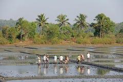 Indien GOA, 03 Februari 2018 Indiska arbetare plogar fältet med skyfflar och reflekteras i vattnet Tungt manuellt arbete in royaltyfria bilder