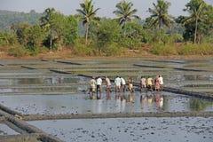 Indien GOA, 03 Februari 2018 Indiska arbetare plogar fältet med skyfflar och reflekteras i vattnet Tungt manuellt arbete in arkivfoton