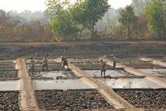 Indien GOA, Januari 19, 2018 Män arbetar i fältet, gräver eller plogar jorden med skyfflar Tungt manuellt arbete i Indien Rice sä fotografering för bildbyråer
