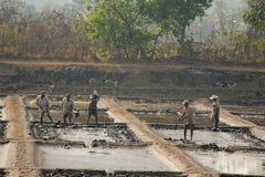 Indien GOA, Januari 19, 2018 Män arbetar i fältet, gräver eller plogar jorden med skyfflar Tungt manuellt arbete i Indien Rice sä arkivbild