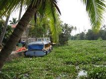 Indien-Palme mit Boot Stockfotos