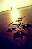Indien und Starfish. Stockfotografie