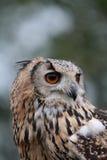 Indier Eagle Owl Arkivbild
