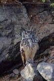 Indier Eagle Owl, Bubobengalensis, Hampi, Karnataka royaltyfri fotografi