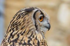Indier Eagle Owl Profile Royaltyfri Foto