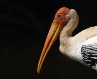 Indier målad stork arkivbild
