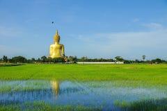 indietro dell'immagine di Buddha Immagine Stock