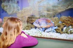 Indietro della bambina che esamina pesce in acquario immagini stock