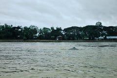 indietro di un delfino irrawaddy sul Mekong fra la Cambogia ed il Laos fotografia stock