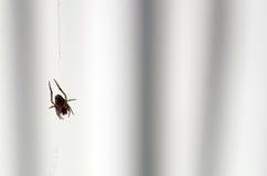Indietro di un ragno in un web Immagini Stock Libere da Diritti