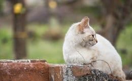A indiferença do gato Imagens de Stock Royalty Free