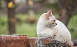 The indifference of the cat. Royalty Free Stock Images