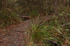 Indigène de voie de promenade de parc national Image stock
