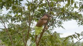 Indigenous boy is climbing a tree in his native amazonian village. General shot of a indigenous boy climbing a tree in his native amazonian village follow-up stock video footage