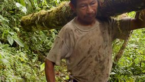 Indigenous carrying wooden logs on their shoulders. Through the jungle in Ecuador stock footage