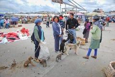 Indigenous Ecuadorian market Stock Image