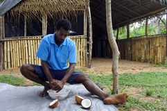 Indigenous Fijian man husking a coconut fruit in Fiji. Coconut oil is one of the major uses for the fruit and is seen as having a variety of applications in Stock Photography