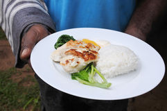 Indigenous Fijian man serve seafood and vegetables dish. In a plate.Fried fish with papaya rice and steamed pumpkin leaves Stock Photos