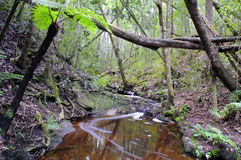 Indigenous forest in South Africa Royalty Free Stock Photography