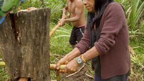 Indigenous making sugarcane juice in the jungle. With traditional method in Ecuador stock video footage