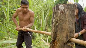Indigenous making sugarcane juice in the jungle. With traditional method in Ecuador stock footage