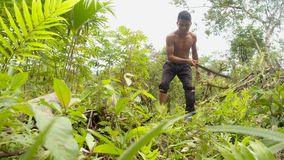 Indigenous man cutting the weeds in the amazon jungle. Indigenous man with a orthopedic foot cutting the weeds in the amazon jungle stock video