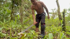 Indigenous man cutting the weeds in the amazon jungle. Indigenous man with a orthopedic foot cutting the weeds in the amazon jungle stock video footage