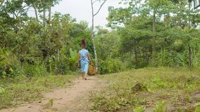 Indigenous Old Man Carrying A Bag With Ayahuasca Sticks. In The Amazon Rainforest In Ecuador stock video footage