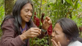 Indigenous old woman applying natural medicine to a young indigenous woman. Indigenous old woman applying natural medicine to the eyes of a young indigenous stock video