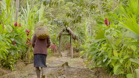 Indigenous old woman carrying a basket of exotic fruits. On her back take from behind stock footage